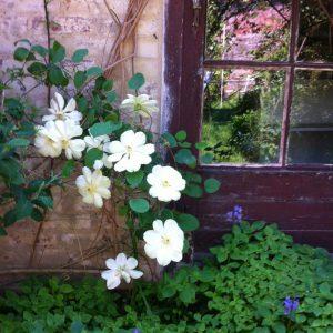 les-mouettes-saint-suliac-fleurs
